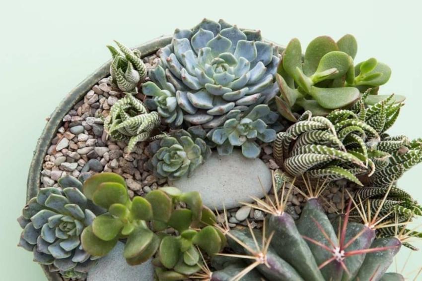 composiiton de cactus succulentes et vegetaux dans un pot
